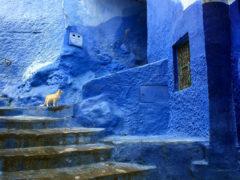 Chefchaouen de blauwe stad Marokko