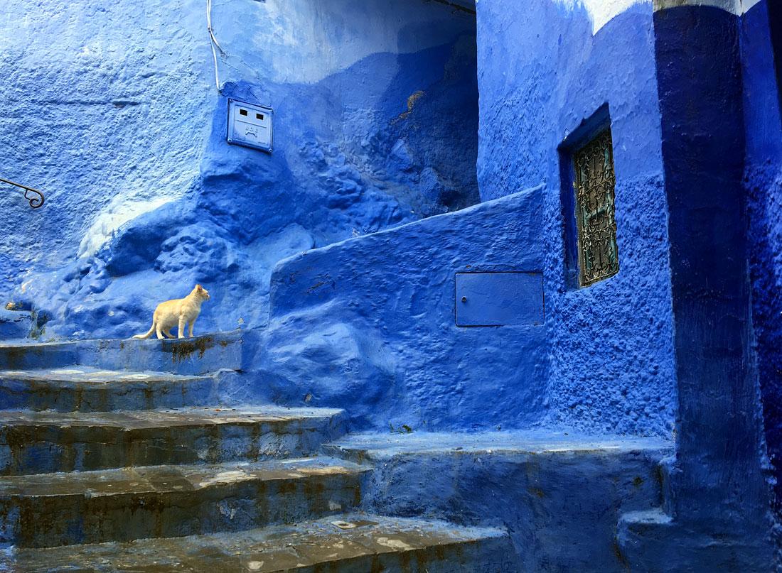 Chefchaouen de blauwe stda in Marokko door Annie Wright
