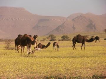 Themareis Zuid-Marokko